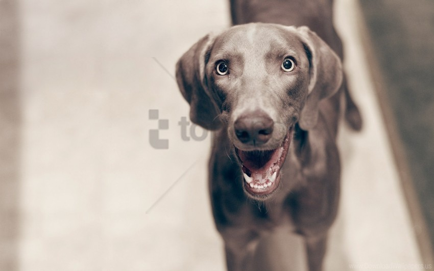 free PNG cheerful, dogs, eyes, face, waiting wallpaper background best stock photos PNG images transparent
