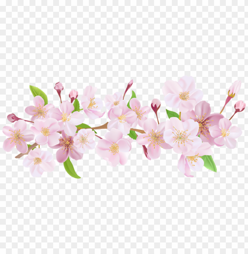 free PNG Download cherry blossom spring branch png png images background PNG images transparent