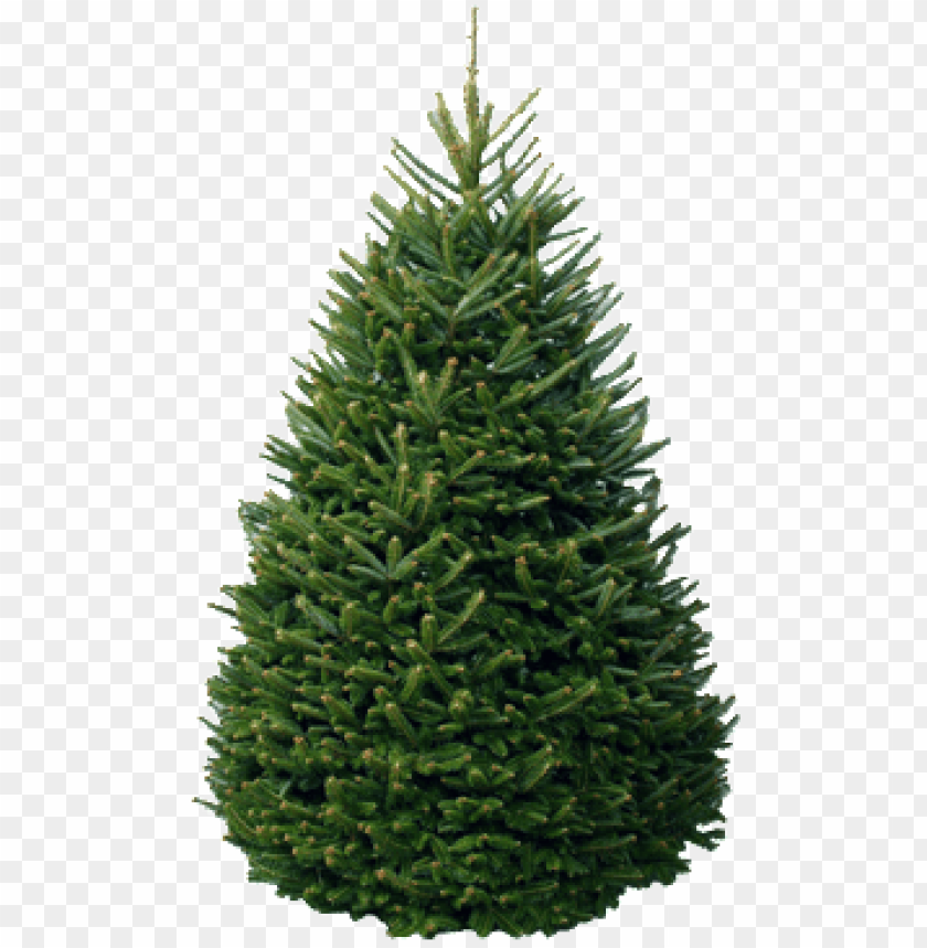 Christmas Trees Png.Christmas Tree Package Fraser Fir Christmas Trees Png