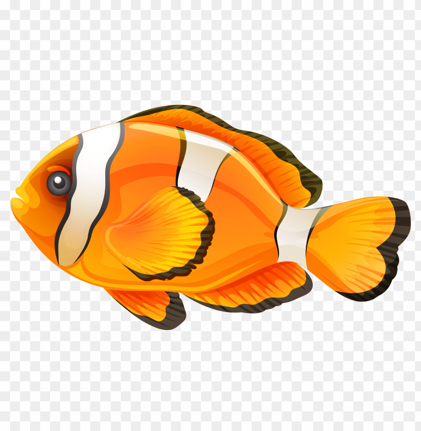 free png clownfish PNG images transparent