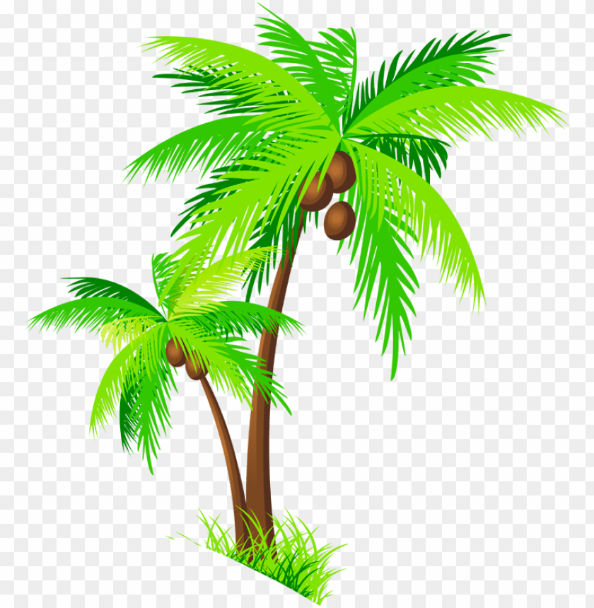 Transparent Background Coconut Tree Png Hd