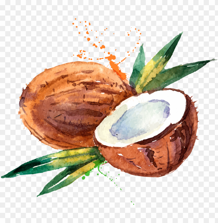 free PNG coconut water coconut milk watercolor painting - watercolor coconut PNG image with transparent background PNG images transparent