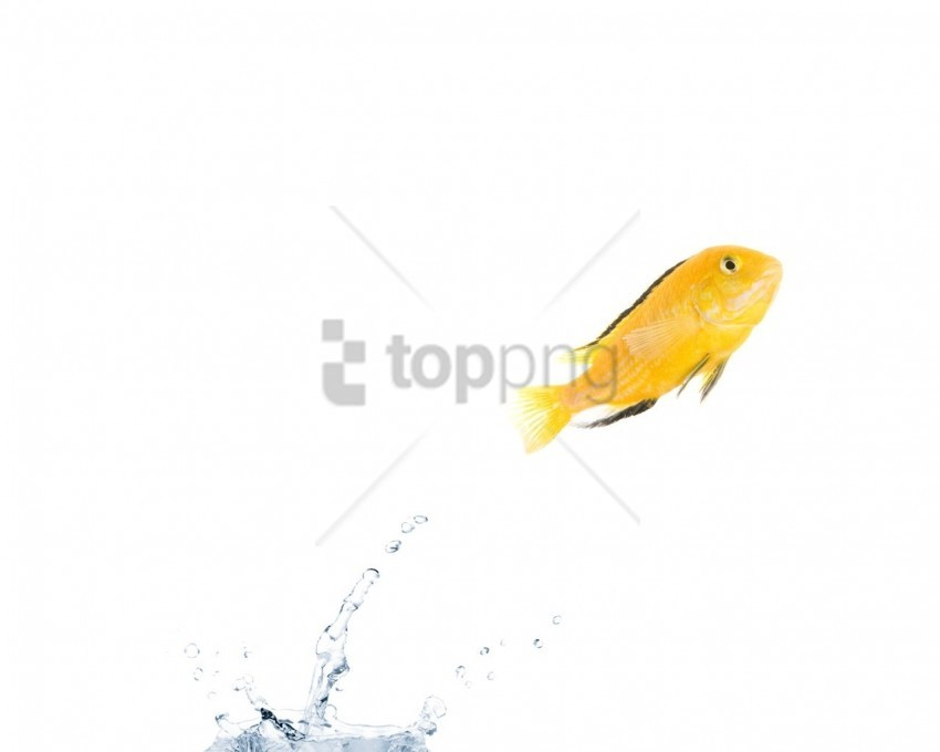 free PNG color, fish, jump, water wallpaper background best stock photos PNG images transparent