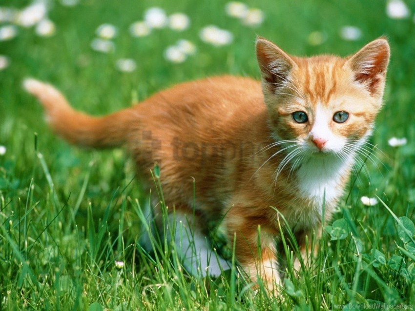 free PNG color, grass, kitten, walk wallpaper background best stock photos PNG images transparent
