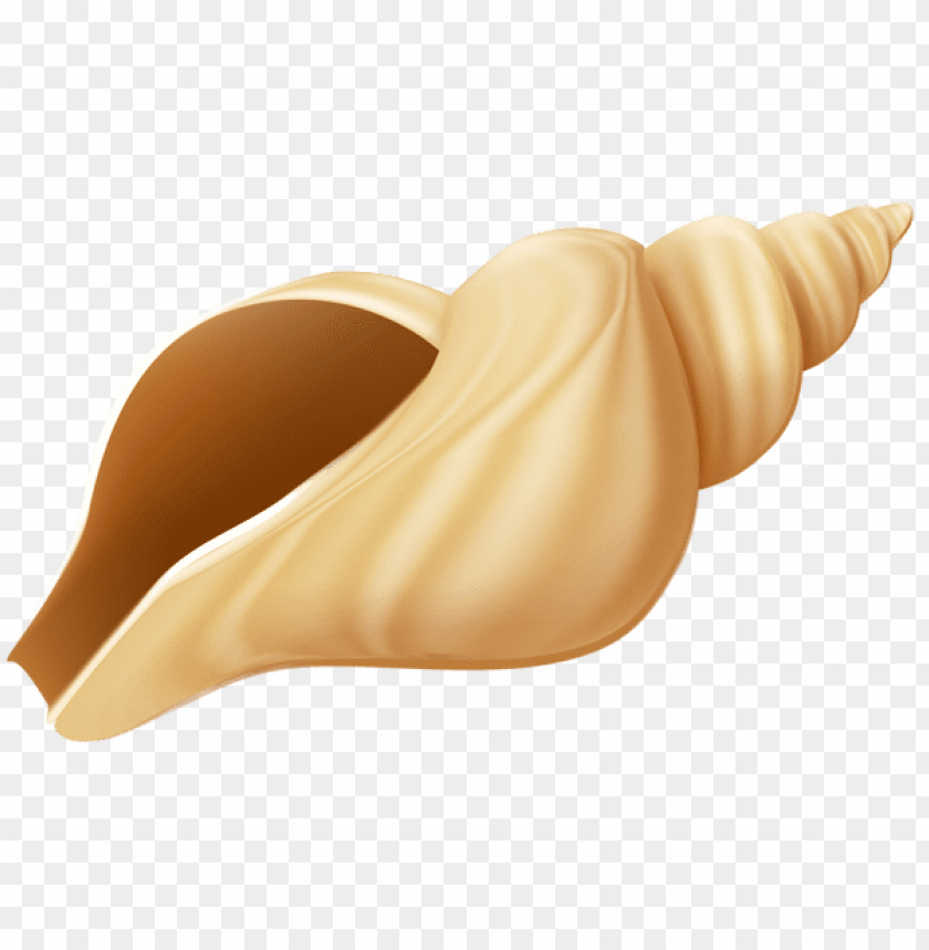 free PNG Download conch clipart png photo   PNG images transparent