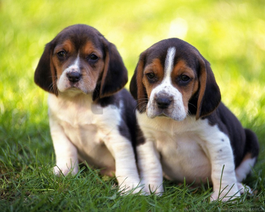 free PNG couple, grass, puppies wallpaper background best stock photos PNG images transparent
