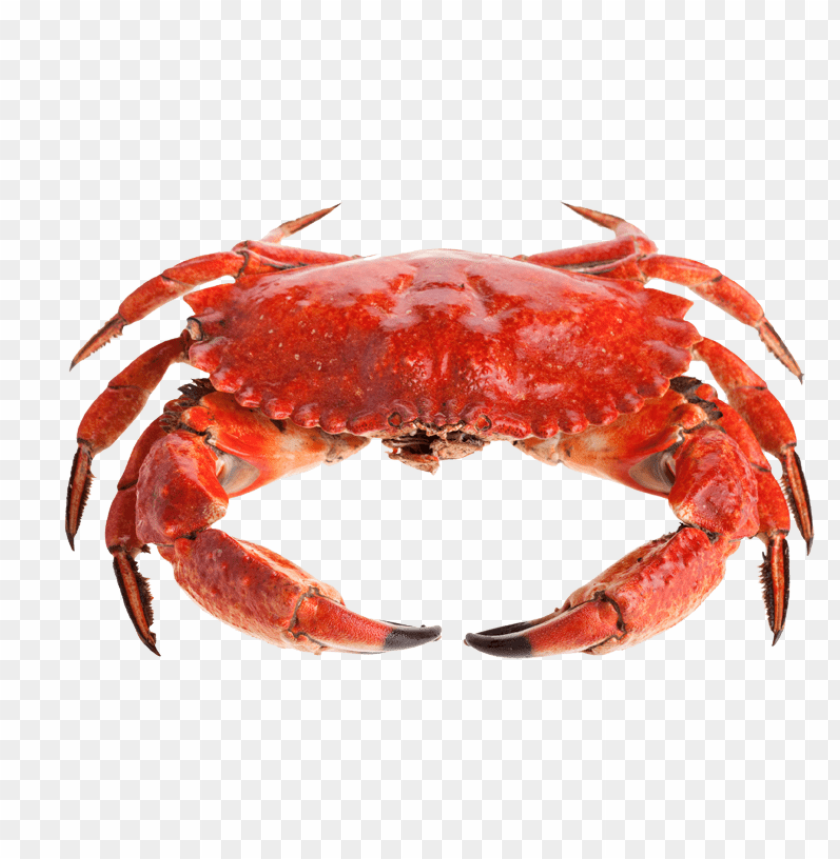 free png crab PNG images transparent