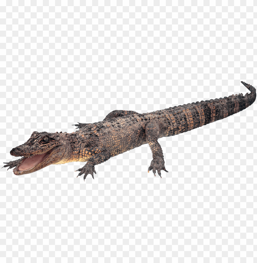 free png crocodile PNG images transparent