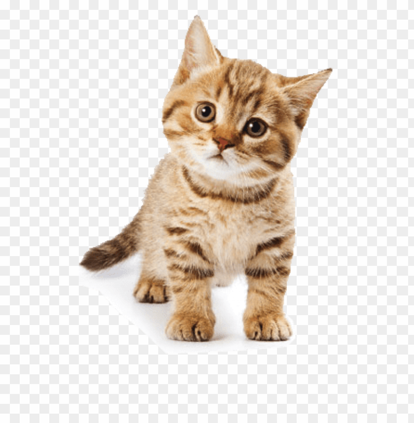 cute cat PNG image with transparent background