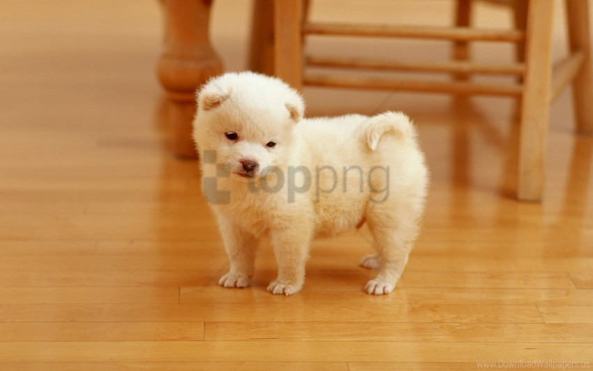 free PNG cutest puppy wallpaper background best stock photos PNG images transparent