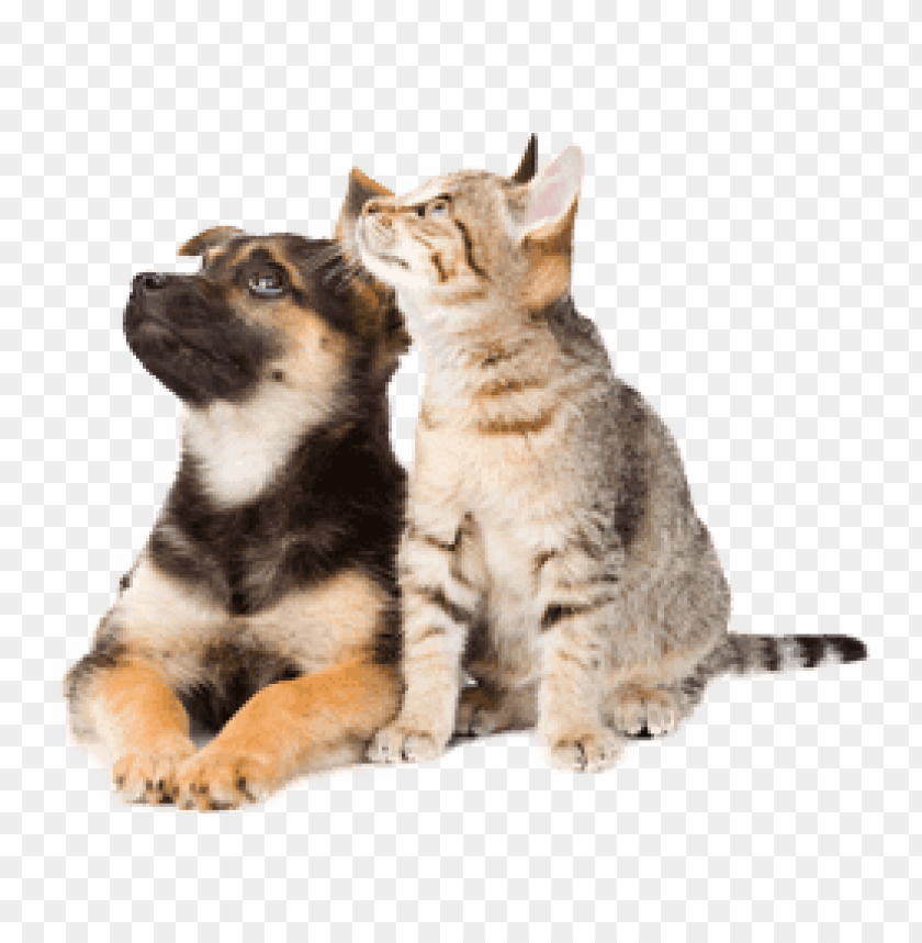 Download Dog Cat Looking Up Png Images Background Toppng