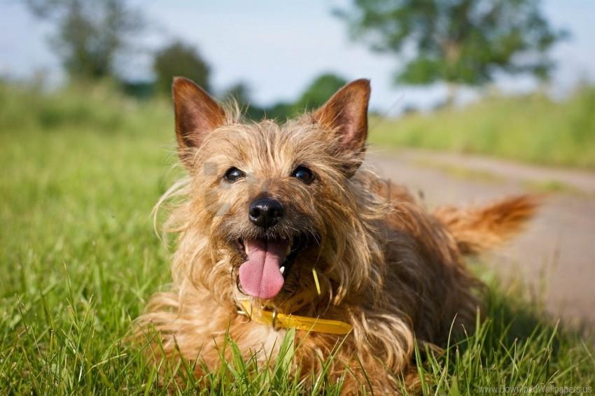 free PNG dog, face, grass, lie wallpaper background best stock photos PNG images transparent