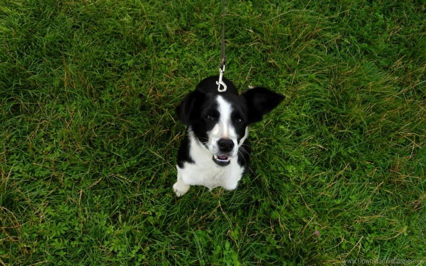 free PNG dog, grass, joy wallpaper background best stock photos PNG images transparent