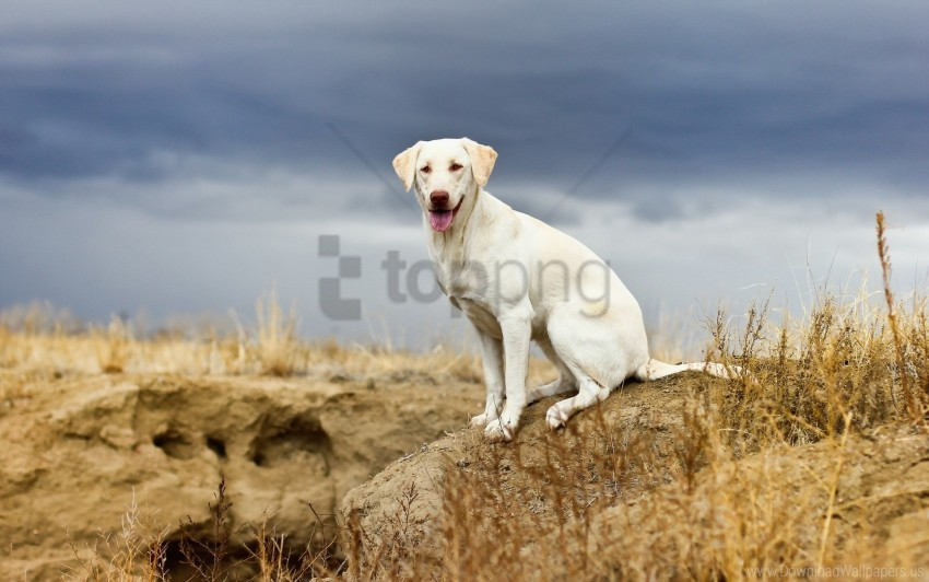 free PNG dog, grass, sit, sky, stone wallpaper background best stock photos PNG images transparent