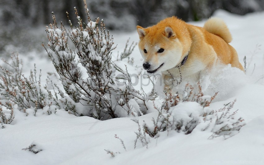 free PNG dog, jump, puppy, run, snow wallpaper background best stock photos PNG images transparent