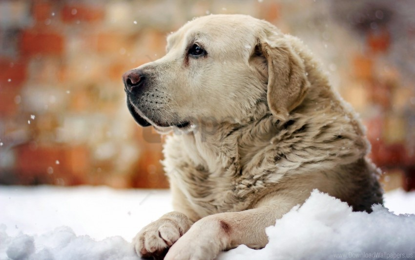 free PNG dog, look, man, snow wallpaper background best stock photos PNG images transparent