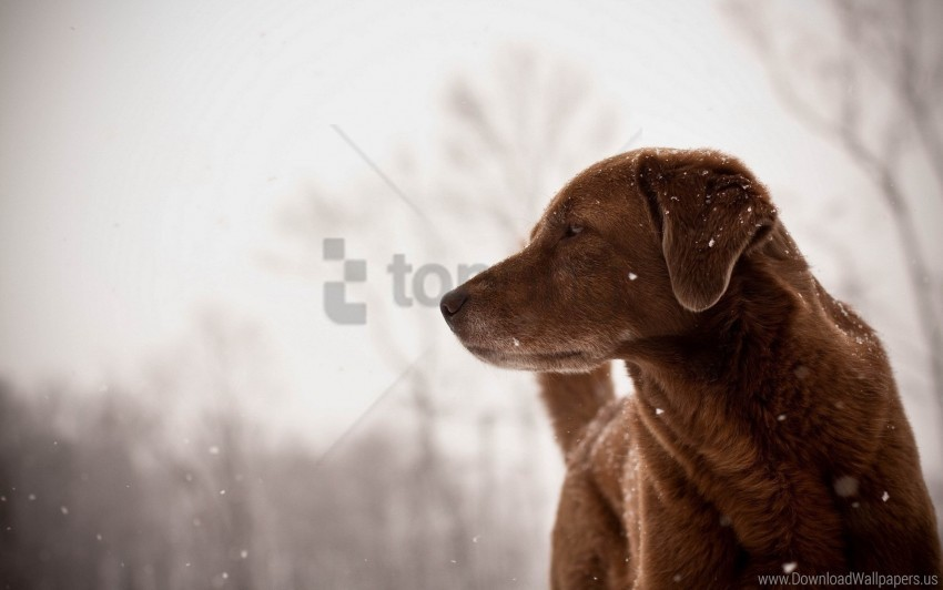 free PNG dog, looks, view wallpaper background best stock photos PNG images transparent