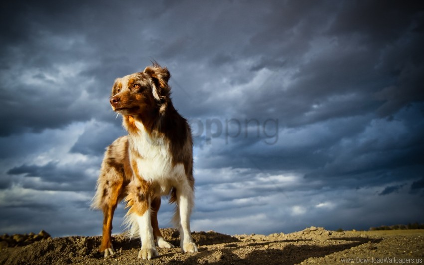 free PNG dog, rocks, sky wallpaper background best stock photos PNG images transparent