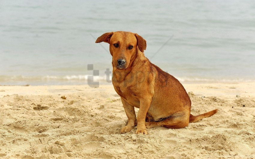 free PNG dog, sad, sand, sitting wallpaper background best stock photos PNG images transparent