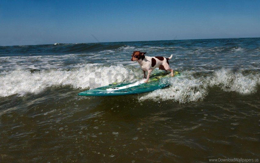 free PNG dog, sports, surfing, wave wallpaper background best stock photos PNG images transparent
