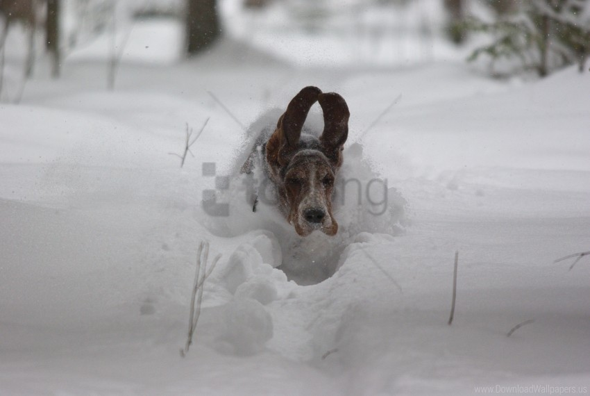 free PNG dog's ears, flight, snow, speed wallpaper background best stock photos PNG images transparent