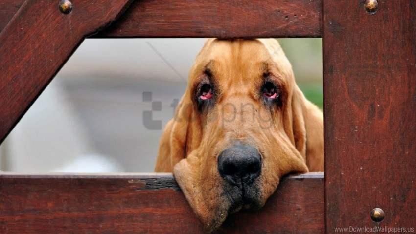 free PNG dogs, face, fence, wooden wallpaper background best stock photos PNG images transparent