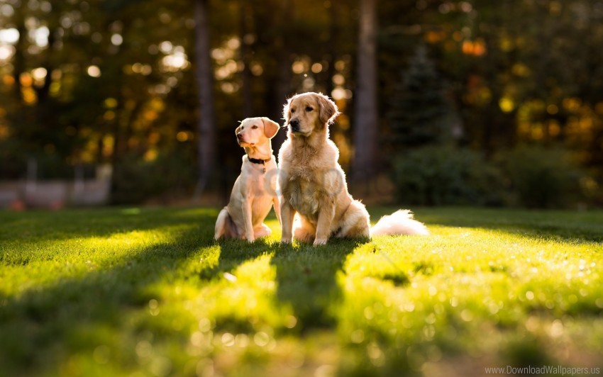 free PNG dogs, grass, steam, summer wallpaper background best stock photos PNG images transparent