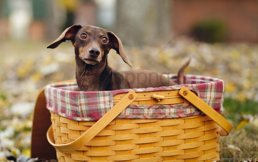 free PNG dogs, shopping, sitting, snout wallpaper background best stock photos PNG images transparent