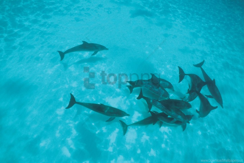 free PNG dolphins, flock, shoal wallpaper background best stock photos PNG images transparent