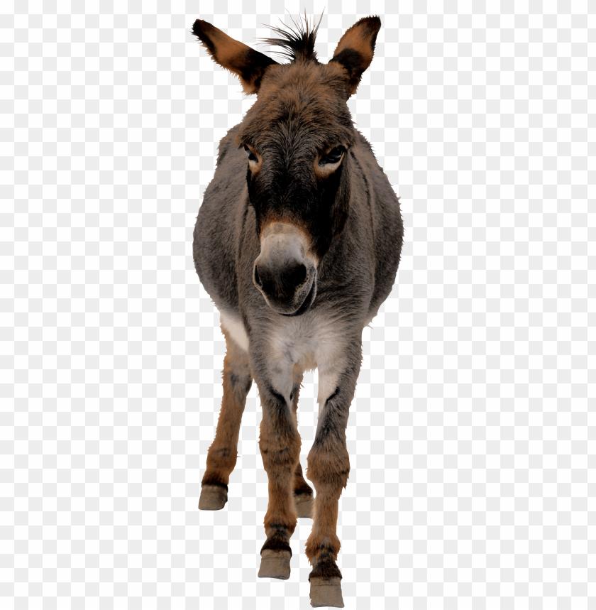 free PNG Download donkey png images background PNG images transparent