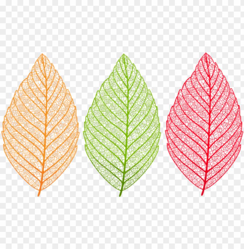 free PNG download transparent leaves set clipart png photo - translucent leaf transparent background PNG image with transparent background PNG images transparent