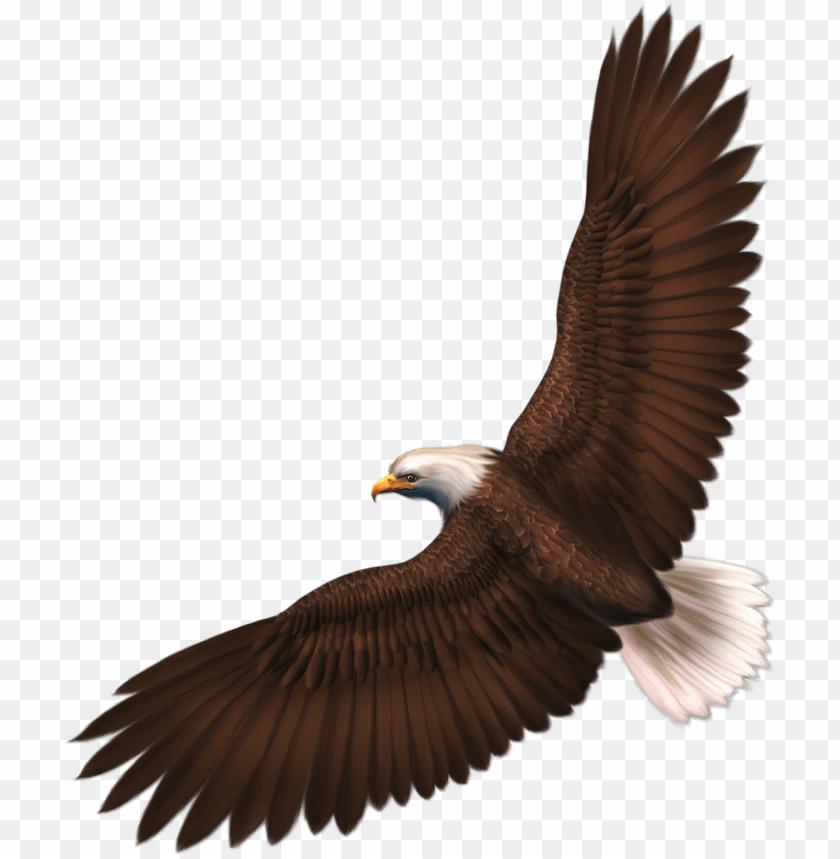 free PNG Download eagle png images background PNG images transparent