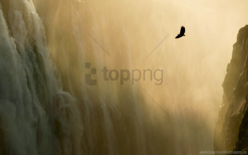 free PNG eagle, wallpaper, waterfall wallpaper background best stock photos PNG images transparent