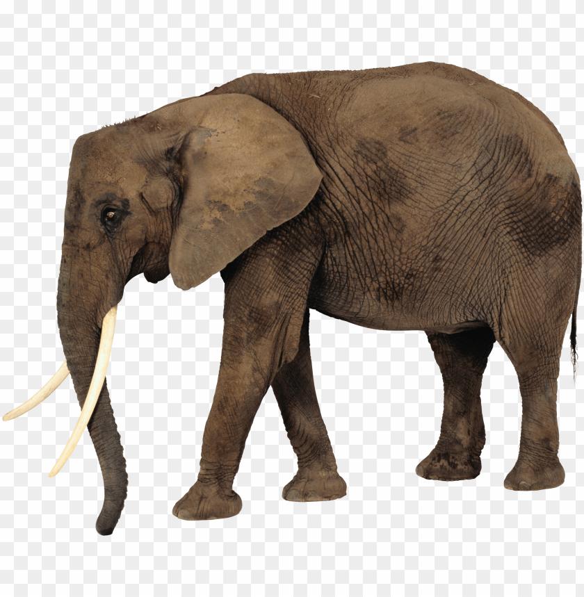 free PNG Download elephant png images background PNG images transparent