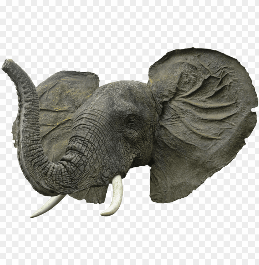 free PNG Download elephant face png images background PNG images transparent