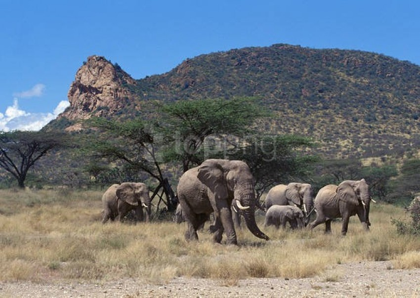 free PNG best stock photos elephant herd wallpaper background PNG images transparent