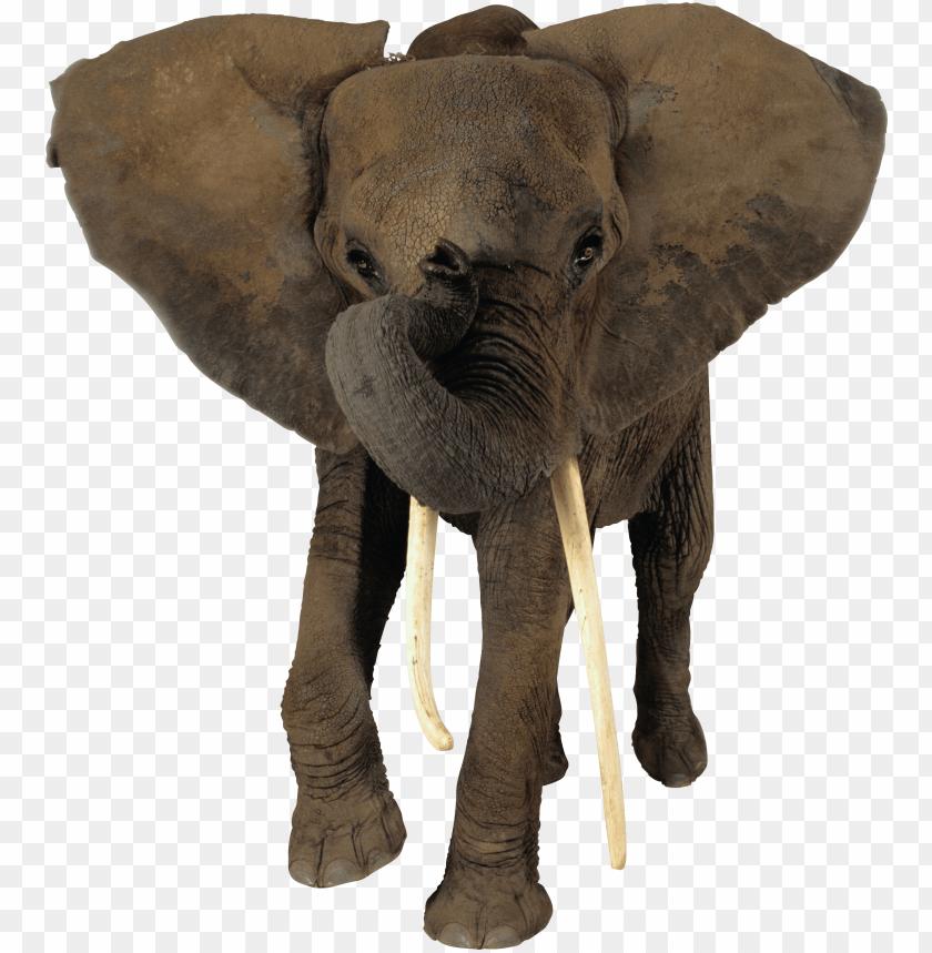 free PNG elephant png - transparent background elephant PNG image with transparent background PNG images transparent
