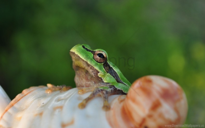 free PNG face, frog, light, sitting wallpaper background best stock photos PNG images transparent
