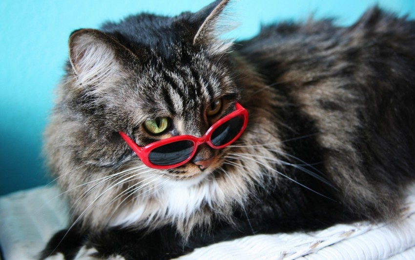 free PNG fashion cat, fluffy, glasses wallpaper background best stock photos PNG images transparent
