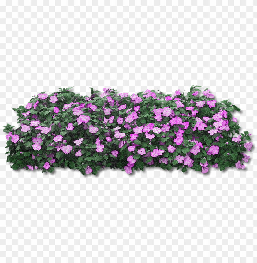 Fiori Viola Png Pink Flower Bush Png Image With