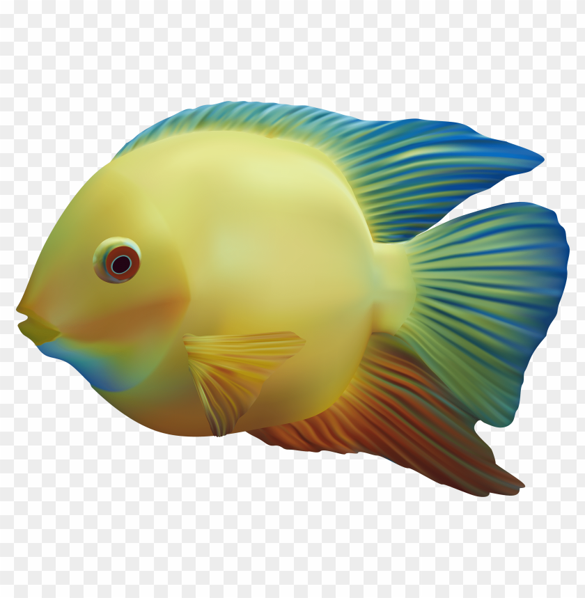 free PNG fish PNG images transparent