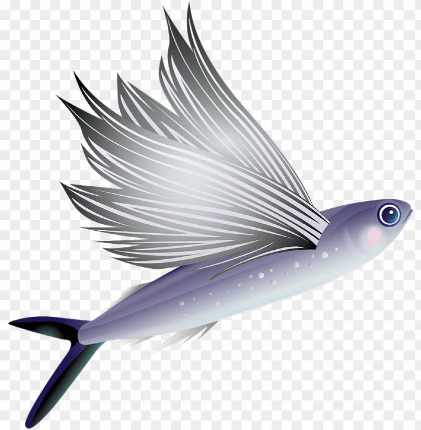 free PNG fish PNG images transparent