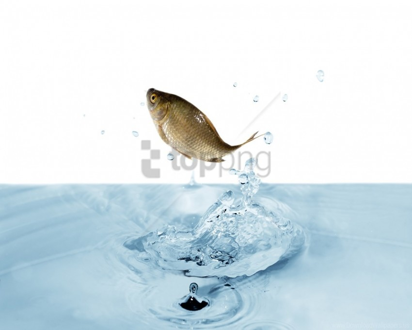 free PNG fish, jump, splash, water wallpaper background best stock photos PNG images transparent
