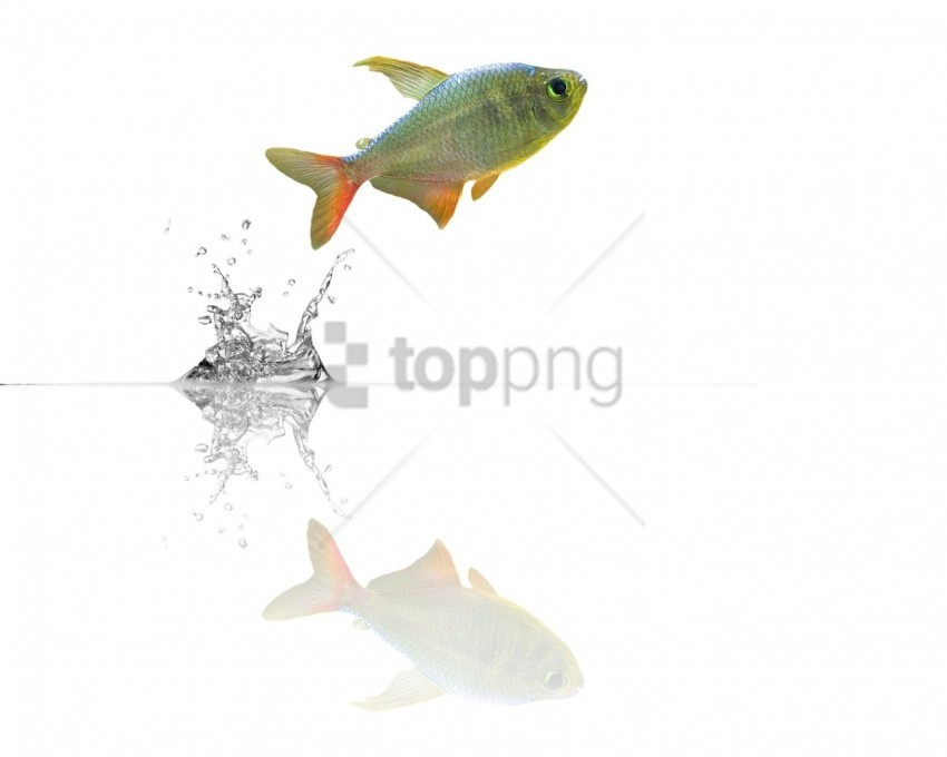 free PNG fish, jump, water wallpaper background best stock photos PNG images transparent