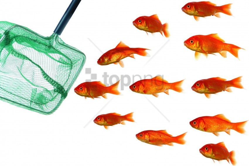 free PNG fish, landing net, pack, white background wallpaper background best stock photos PNG images transparent