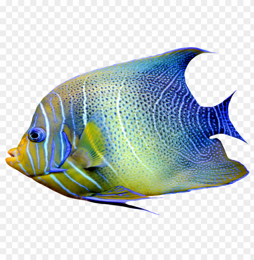 free png fish s PNG images transparent