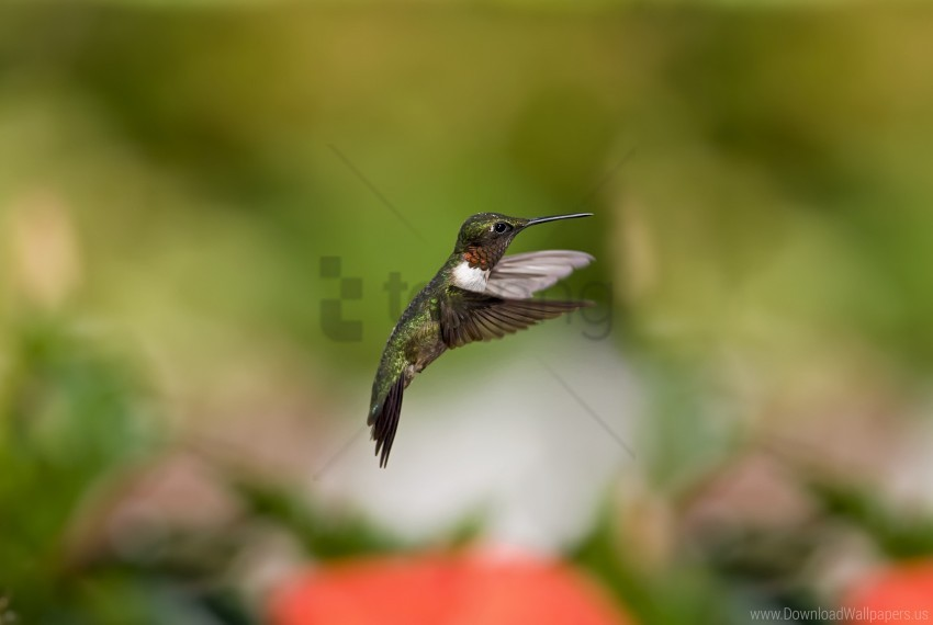 free PNG flight, hummingbird, motion blur wallpaper background best stock photos PNG images transparent