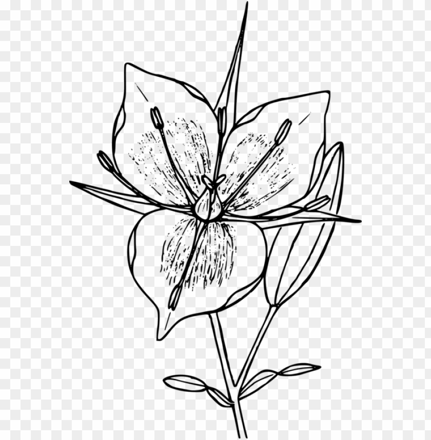 Floral Design Drawing Flower Line Art Computer Icons