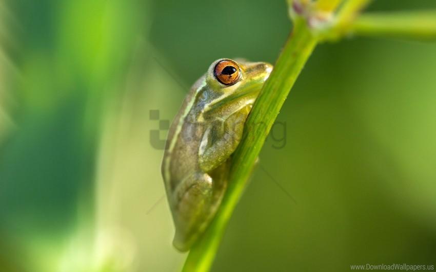 free PNG florida, frog, north port, usa wallpaper background best stock photos PNG images transparent