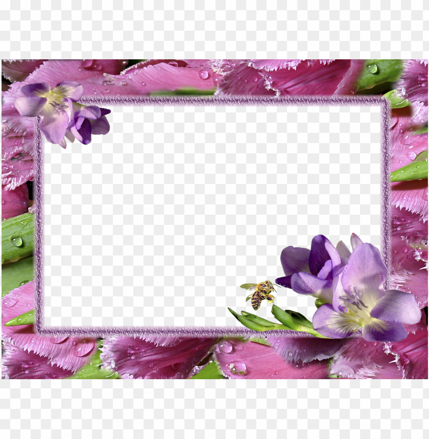 Flower Photo Frames Hd Png Image With Transparent Background Toppng